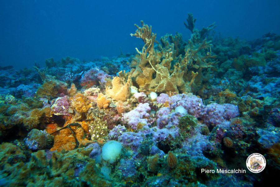 """""""Come sta cambiando il nostro mare?"""" … Storie dal mare Adriatico…"""